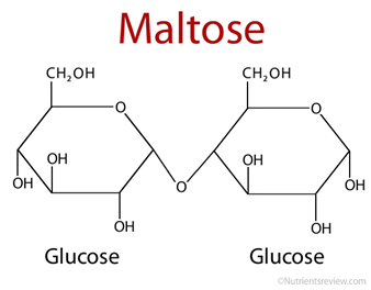 maltose